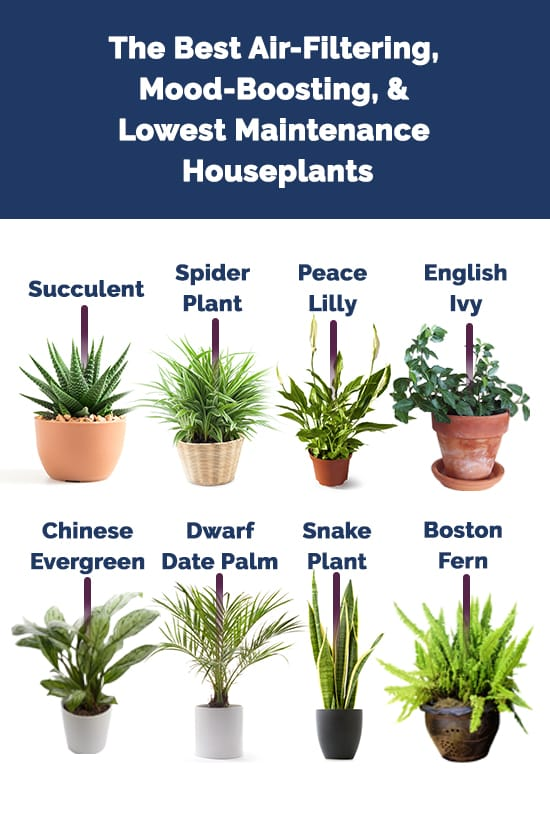 houseplant infographic